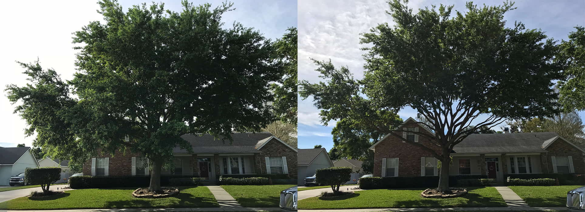 Branch Land & Tree - Before and After