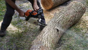 Branch Land and Tree - Tree Trimming and Cutting