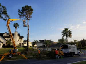 Tree Removal - Magnolia Pointe - Clermont, FL