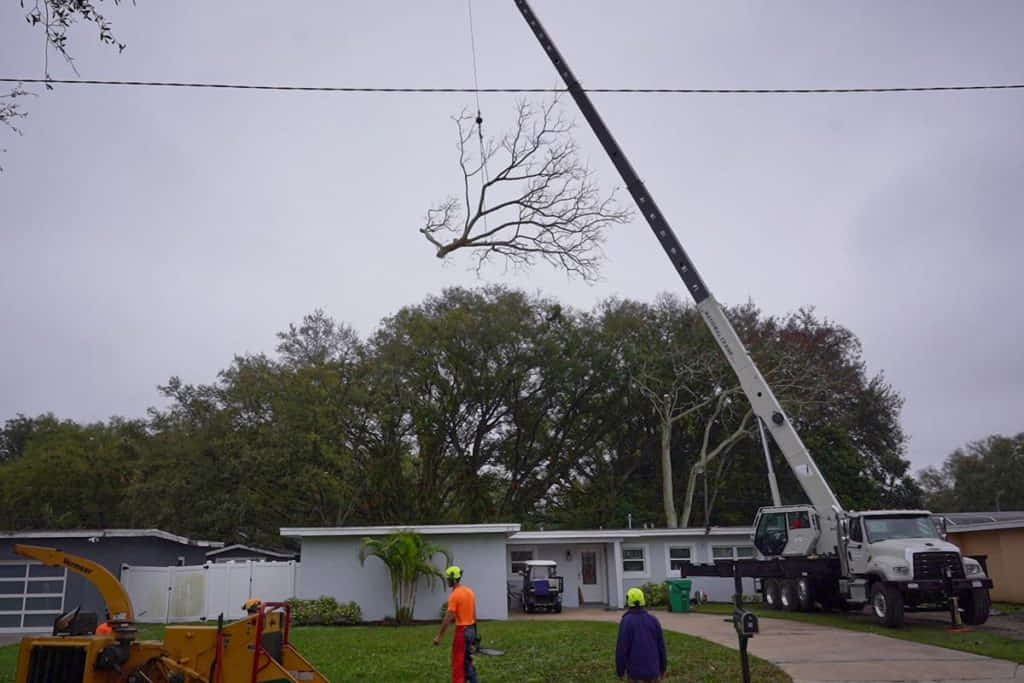 Upper Canopy Removal