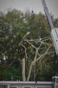 Mid Canopy Removal