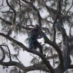 Roping a limb for removal