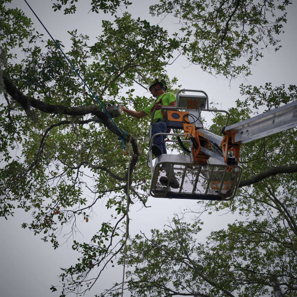 Roping and dropping a limb from over the customer's house - (5-18-2020)