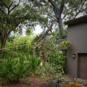 Roping and dropping a limb from over the customer's house - Picture 6 (5-18-2020)