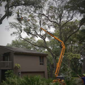 Roping and dropping a limb from over the customer's house - Picture 1 (5-18-2020)