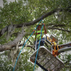 Setting the rope for limb removal (5-18-2020)