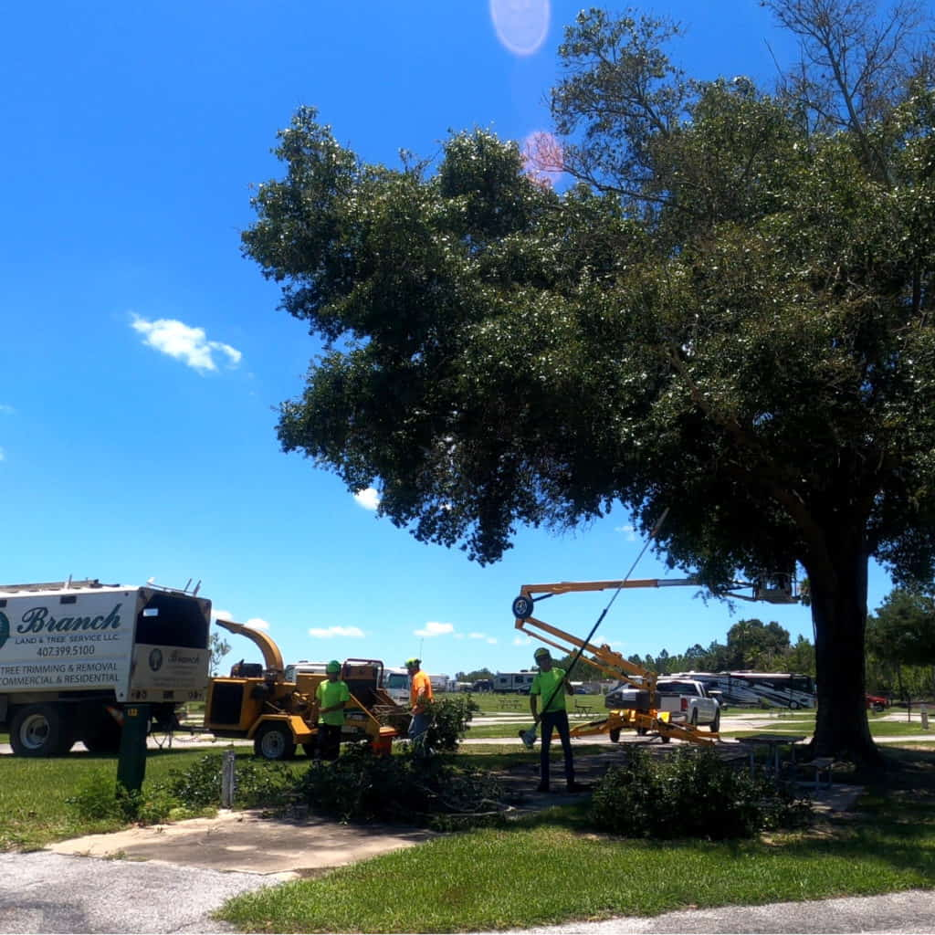 Florida RV Park Tree Trimming