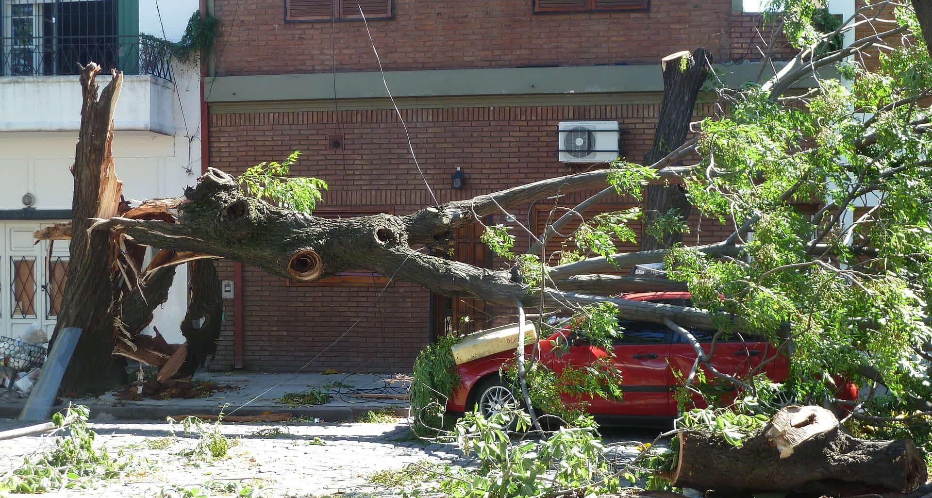 Florida Property Damage