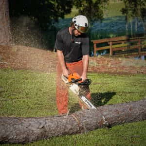 Cutting up dead pine