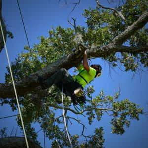 Upper Canopy Climbing