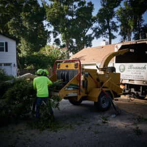 Loading larger branches into the chipper