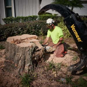 Cutting the stump down