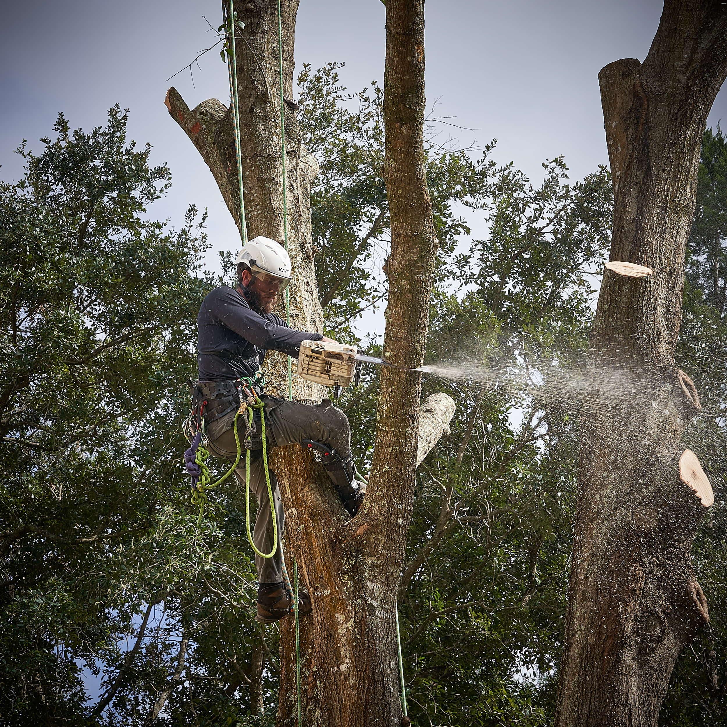 Cutting in the tree