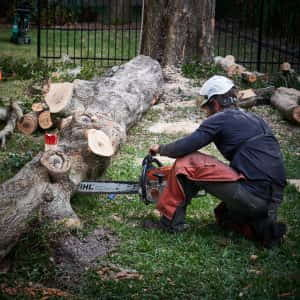 Cutting up the trunk
