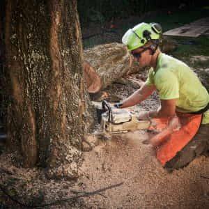 Cutting down the stump