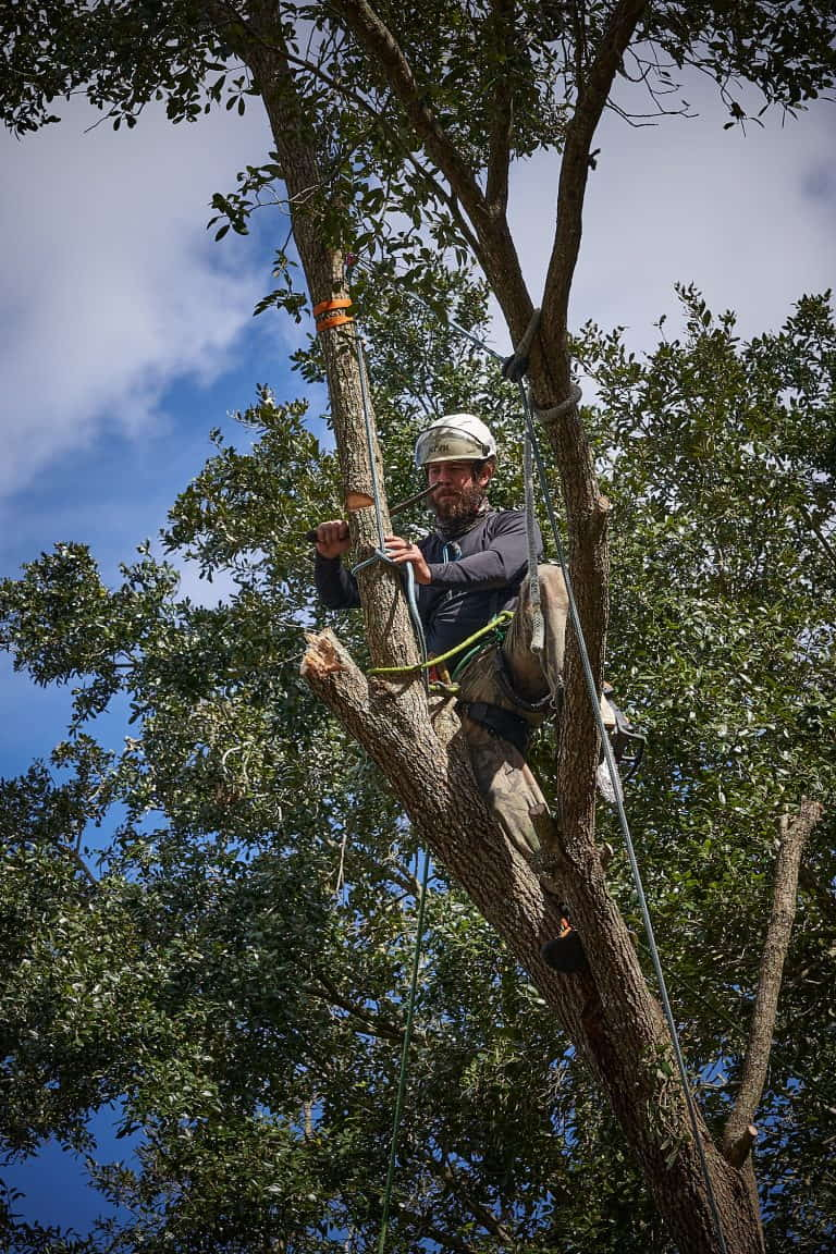 Ethan Cutting a Branch Section