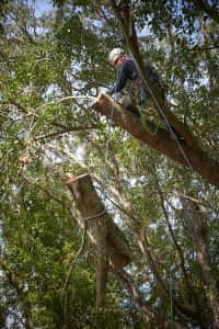Lowering a Cut Branch