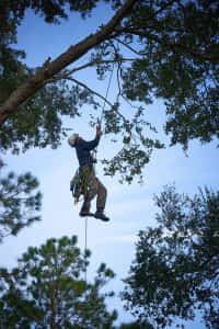 Ethan Climbing
