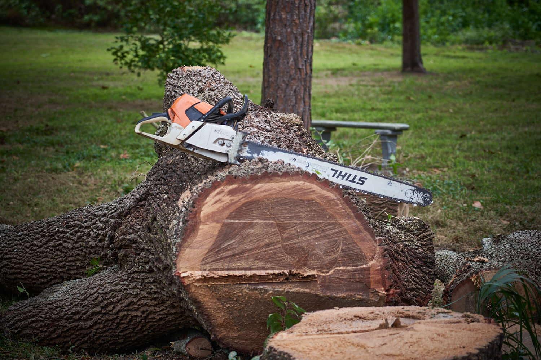 Large Oak Tree Removal in Ocoee, FL