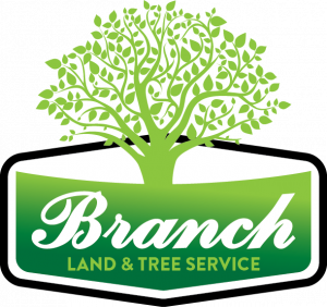 Branch Land and Tree