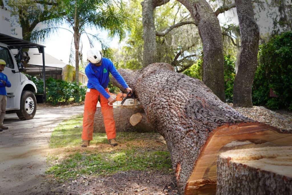 Oak Tree Removal in Ocoee FL