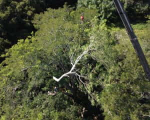 Ear Tree Removal with Crane